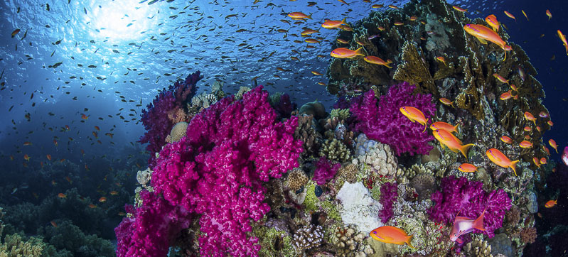 Rich colours of a Red Sea coral reef