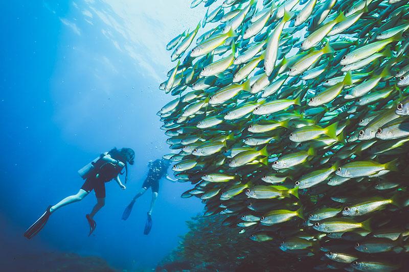 Underwater cameraman